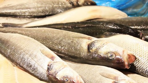 Waarom is vis een seizoensproduct? Wat kan er misgaan bij de bereiding? Wat is de invloed van visquota op de horeca? Alles wat je nog niet wist over vis!